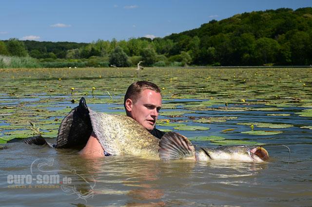 wallerfischen in frankreich