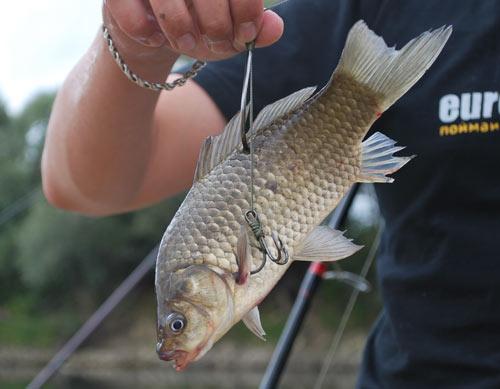 ловля рыбы на химию