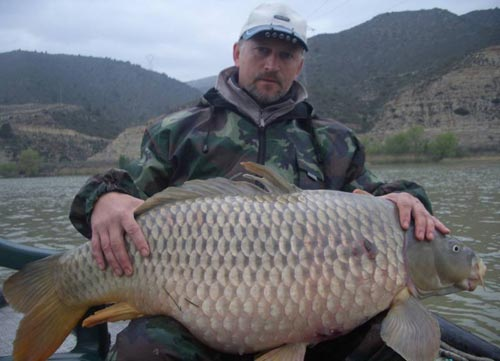 monstercarp ebro