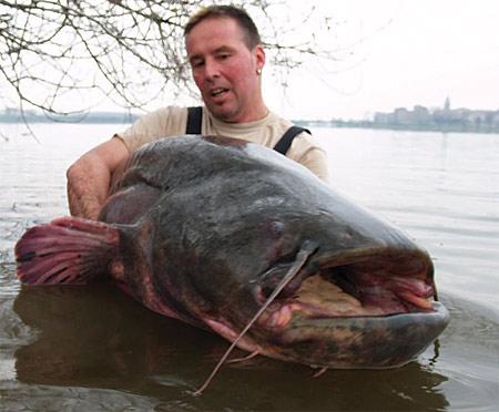 Трофейный сом весом 117кг и длиной 252 см.