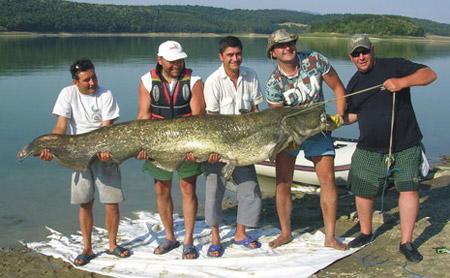 Болгарский сом 112 кг, длина 254 см