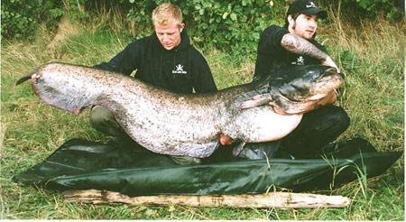 Германия. Сом длинною 217,5 см и весом 83,6 кг