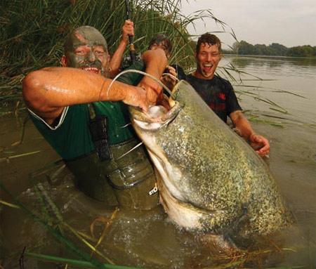Испания. Сом 103 кг и 248 см