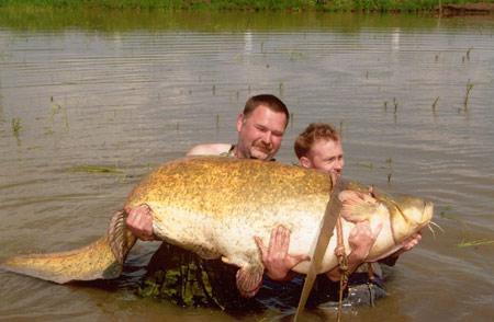 Рекордный сом весом 112 кг. и длиной 227 см.